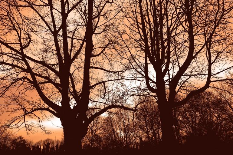 tree-3082653_1920